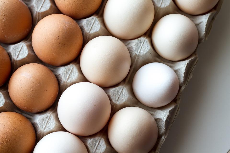 鶏の卵の色 赤玉と白玉の違いは何か?